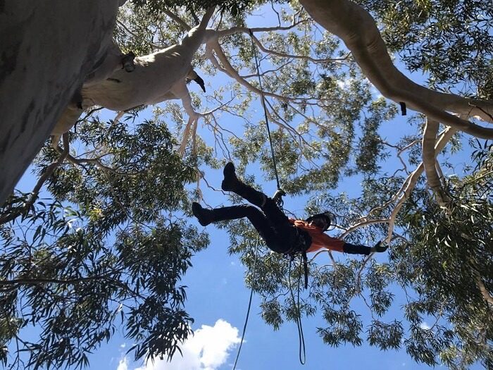 Tree Removal Potts Hill